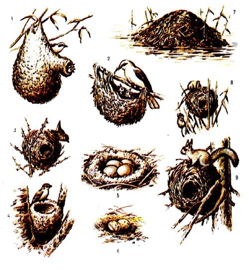 Гнёзда зверей: 7 - хатка ондатры, 8 - гнездо мыши-малютки