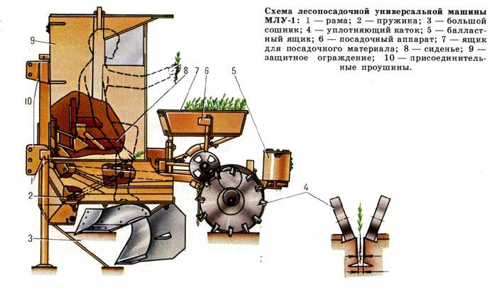 Схема лесопосадочной