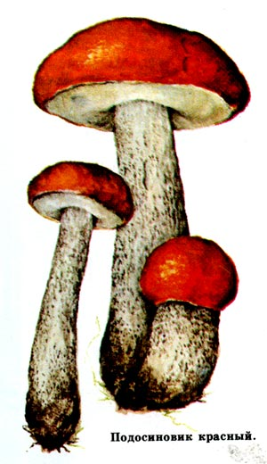Идея, что некоторые грибы