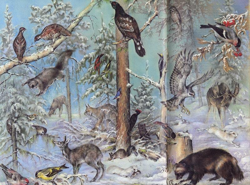 Звери и птицы сибирской тайги (зима).  Вверху слева пара