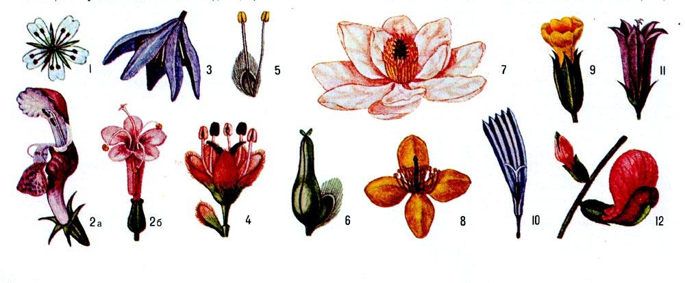 Различные виды цветка (масштаб